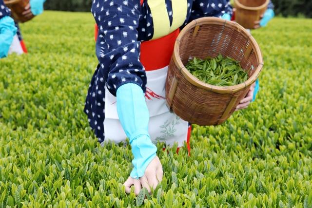 鹿児島中央製茶 イメージ画像01