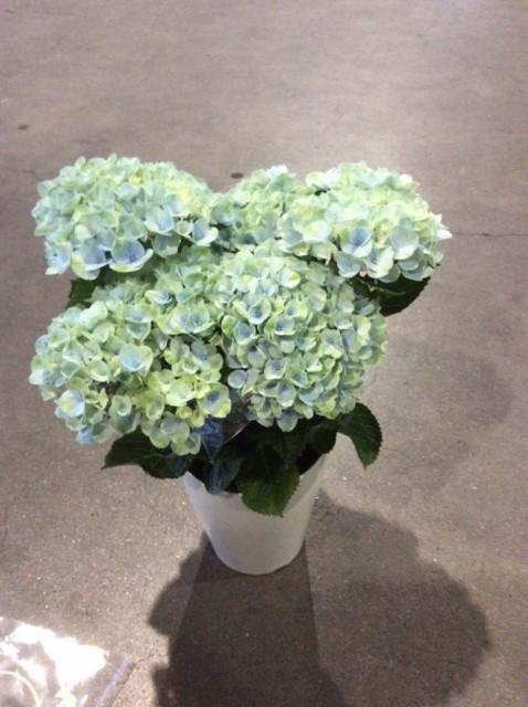 鹿児島園芸花市場 イメージ画像02