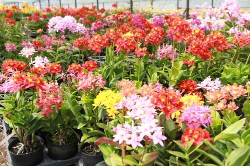 鹿児島園芸花市場 イメージ画像03
